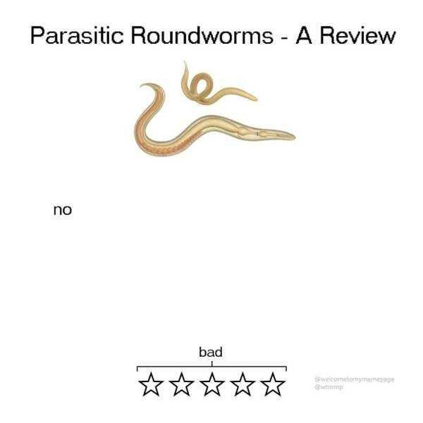 funny-animal-reviews (6)
