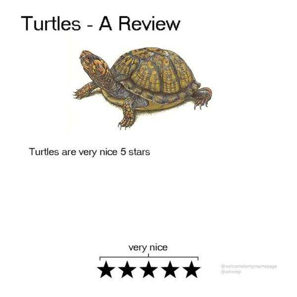 funny-animal-reviews (8)