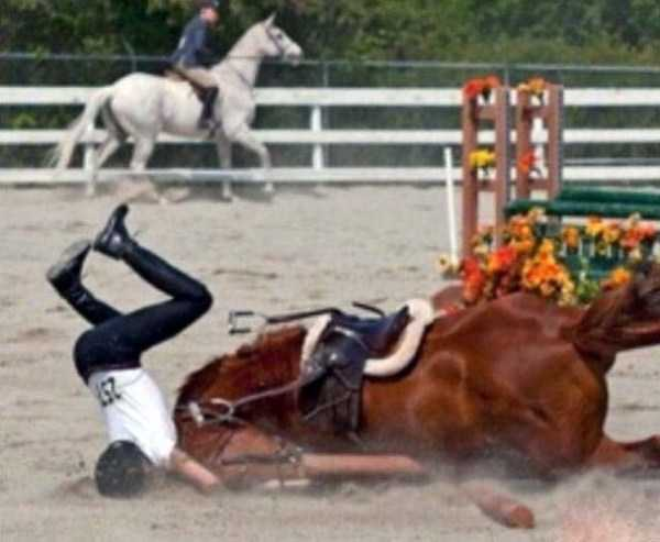 perfectly-timed-pictures (35)