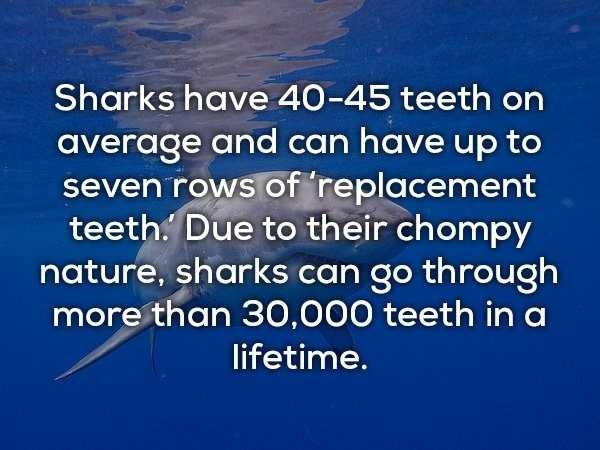 scary-shark-facts (1)