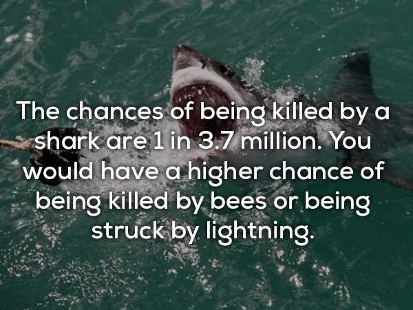 scary-shark-facts (10)