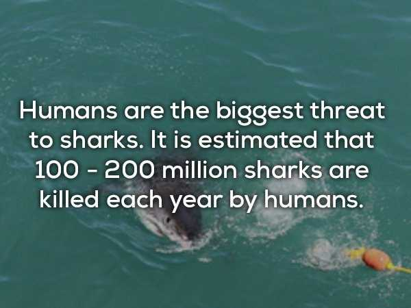 scary-shark-facts (11)