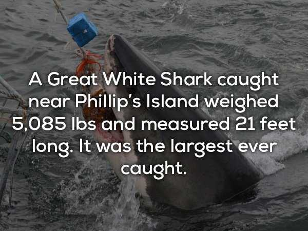 scary-shark-facts (13)