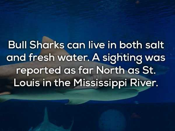 scary-shark-facts (14)