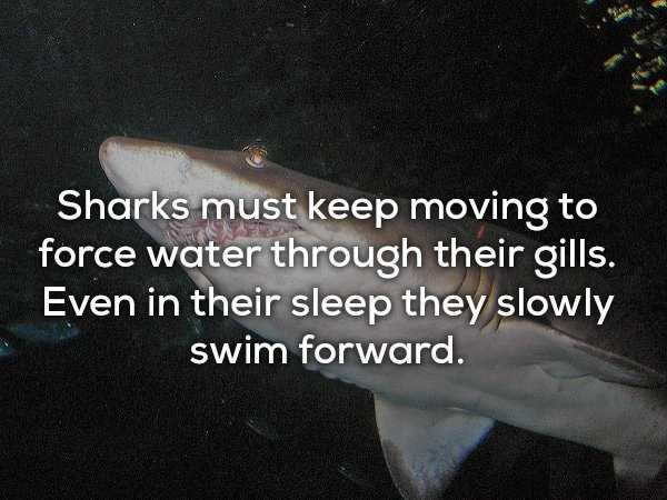 scary-shark-facts (15)