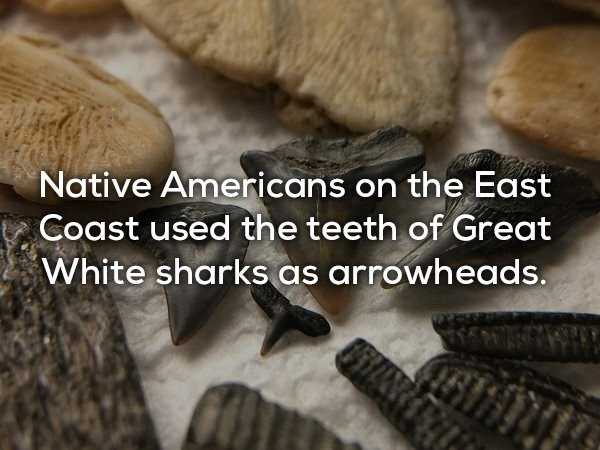scary-shark-facts (17)
