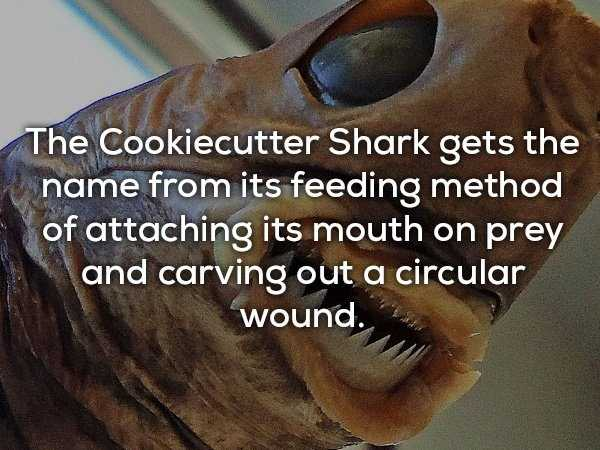 scary-shark-facts (4)