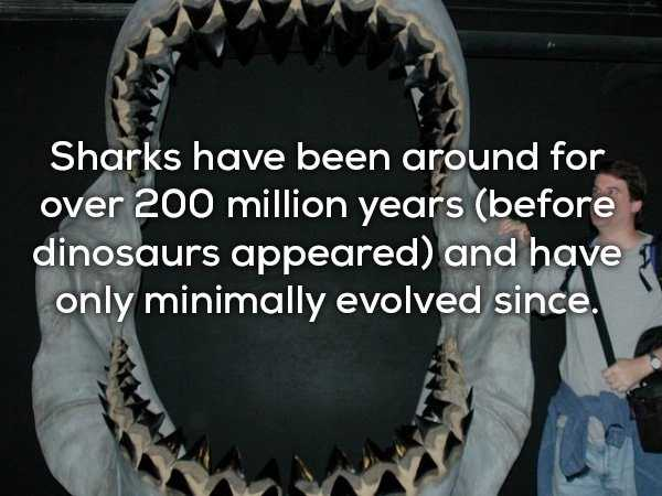 scary-shark-facts (6)
