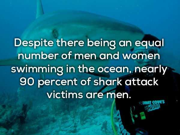 scary-shark-facts (7)
