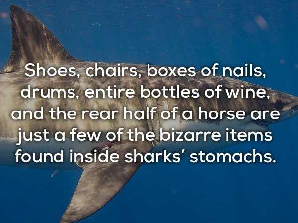 scary-shark-facts (8)