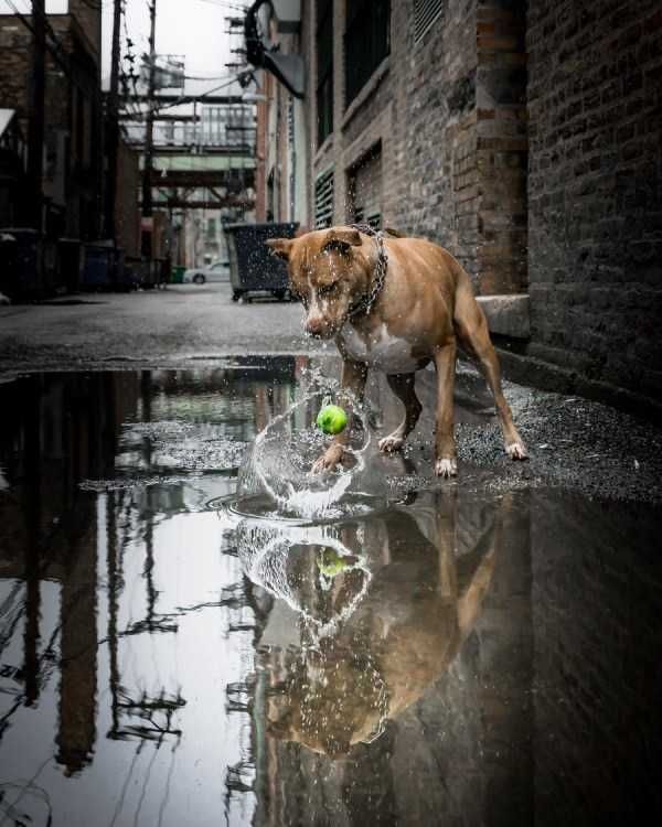 perfect-timing-photos (66)