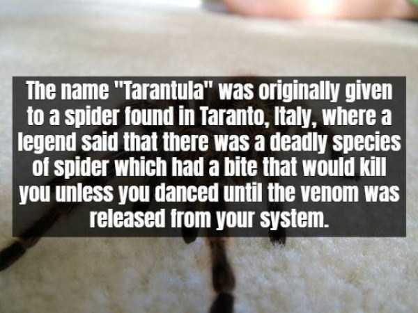tarantula-facts (12)
