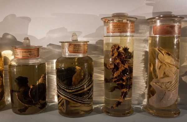 bizarre-things-in-jars (18)
