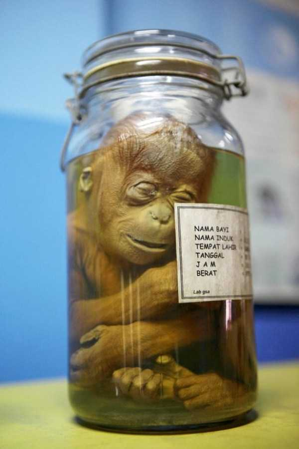 bizarre-things-in-jars (20)
