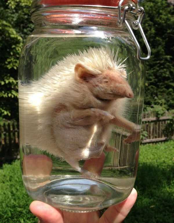 bizarre-things-in-jars (7)