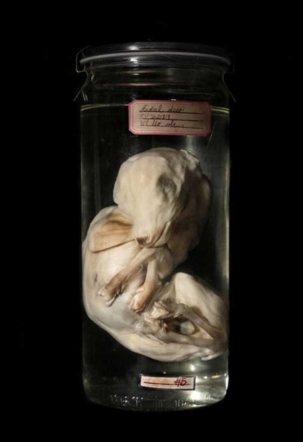 bizarre-things-in-jars (8)