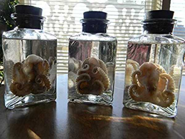 bizarre-things-in-jars (9)