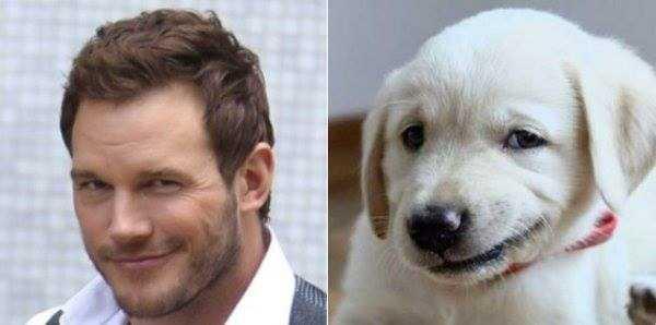 dogs-humans-doppelgängers (12)