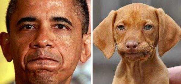 dogs-humans-doppelgängers (25)