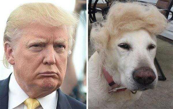 dogs-humans-doppelgängers (4)