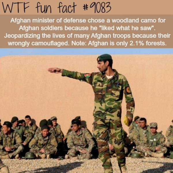 fun-facts (29)