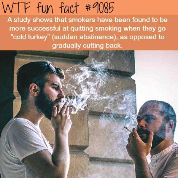 fun-facts (30)