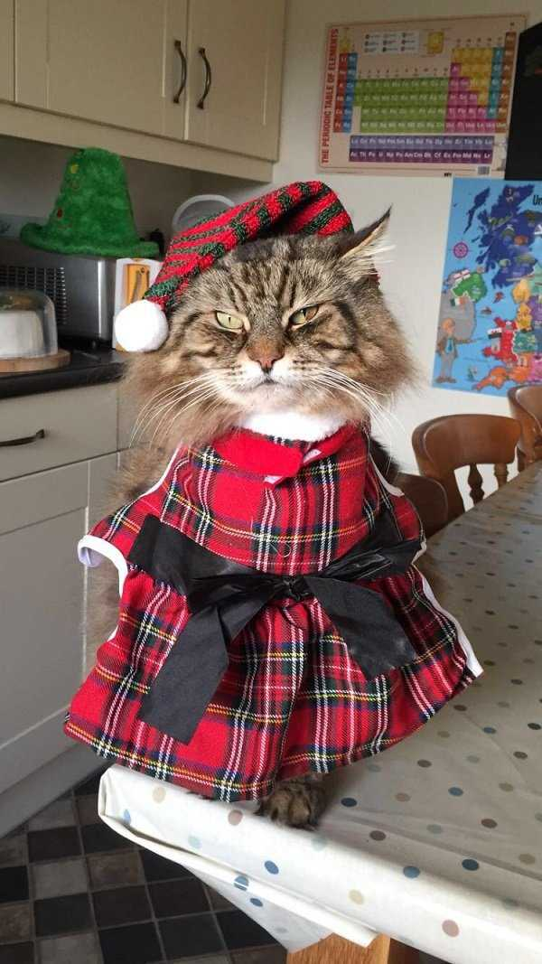 funny-scotland (25)