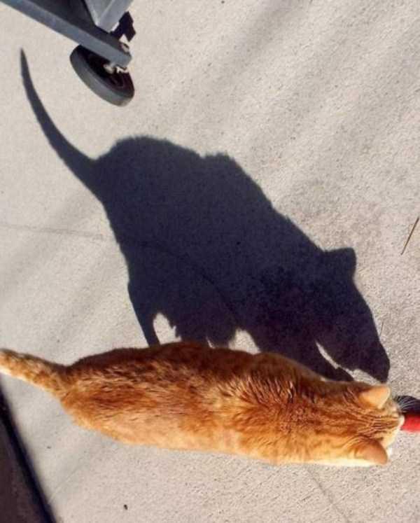 funny-shadows (31)