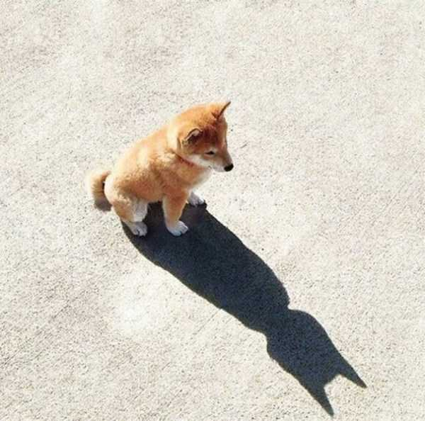 funny-shadows (39)
