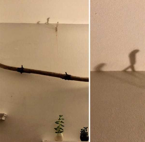 funny-shadows (40)