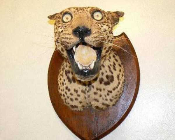 taxidermy-failures (9)