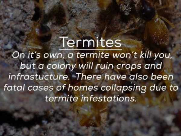 creepy-facts-about-bugs (1)