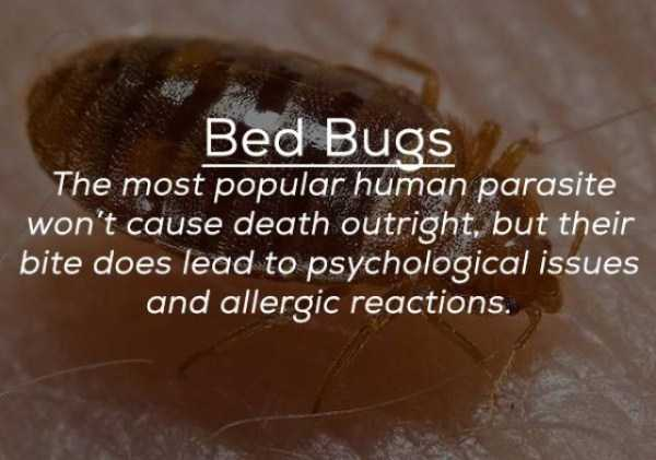 creepy-facts-about-bugs (10)