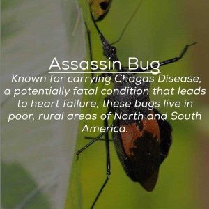 creepy-facts-about-bugs (14)
