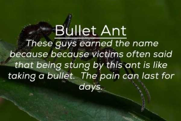 creepy-facts-about-bugs (15)