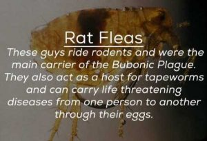 creepy-facts-about-bugs (18)