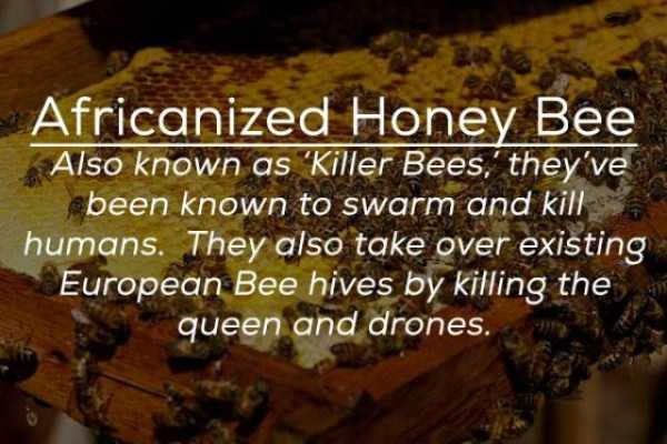 creepy-facts-about-bugs (19)