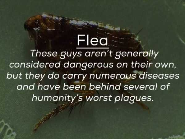creepy-facts-about-bugs (20)