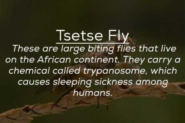 creepy-facts-about-bugs (25)