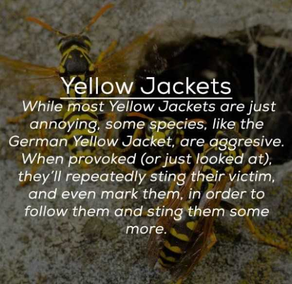 creepy-facts-about-bugs (5)