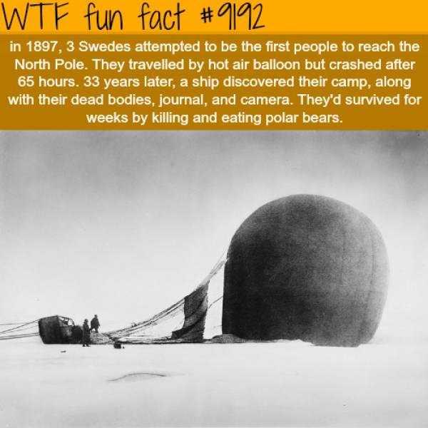 fun-facts (35)