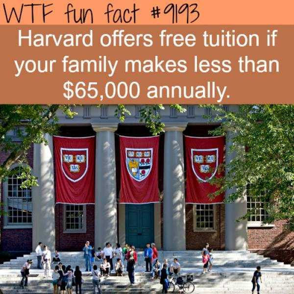 fun-facts (36)