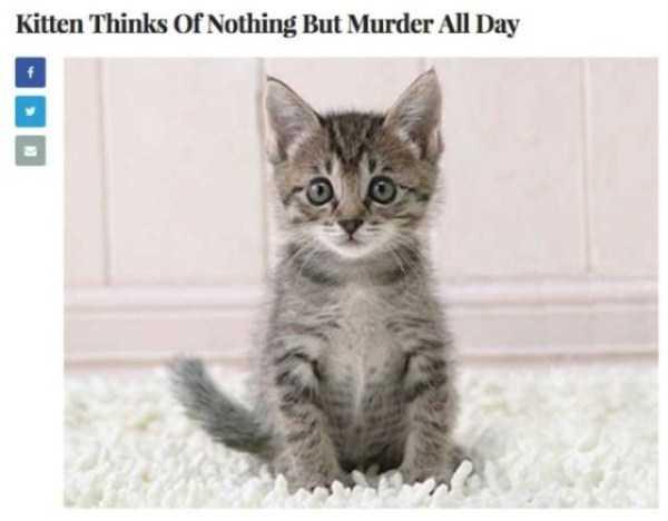 hilarious-the-onion-headlines-25