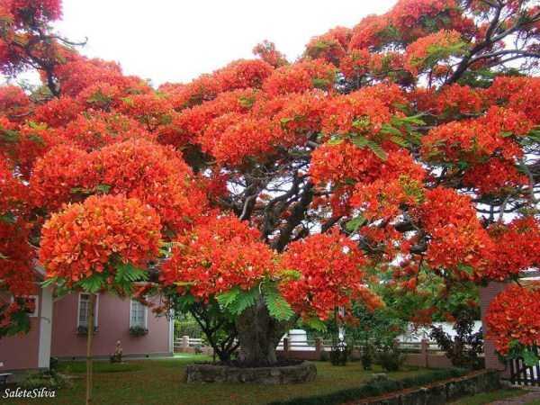 strange-trees (1)