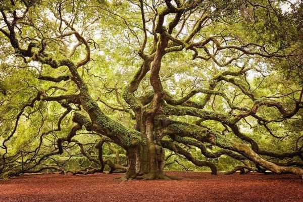 strange-trees (10)