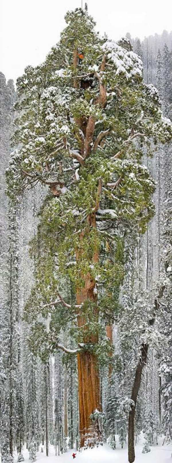 strange-trees (11)