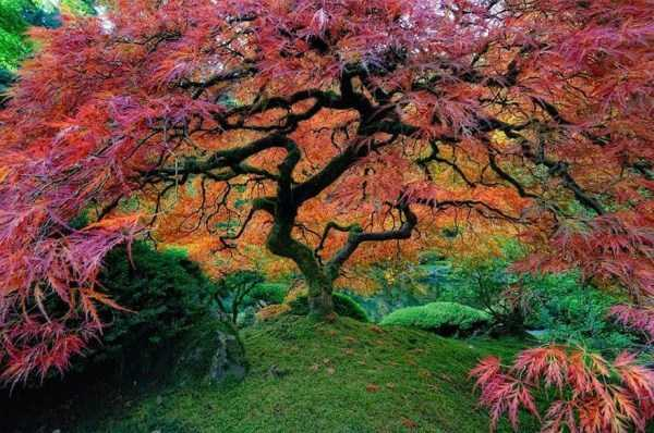 strange-trees (14)
