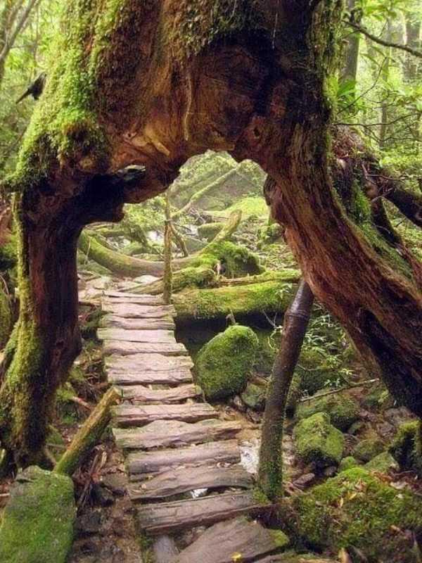 strange-trees (15)