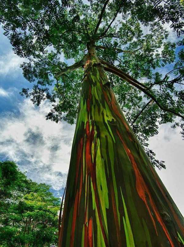 strange-trees (17)