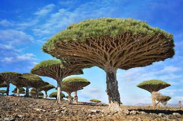 strange-trees (2)